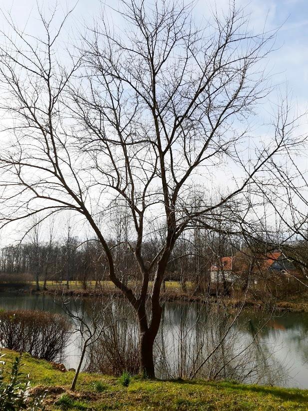 Izlet na rijeku Odru, Turopolje