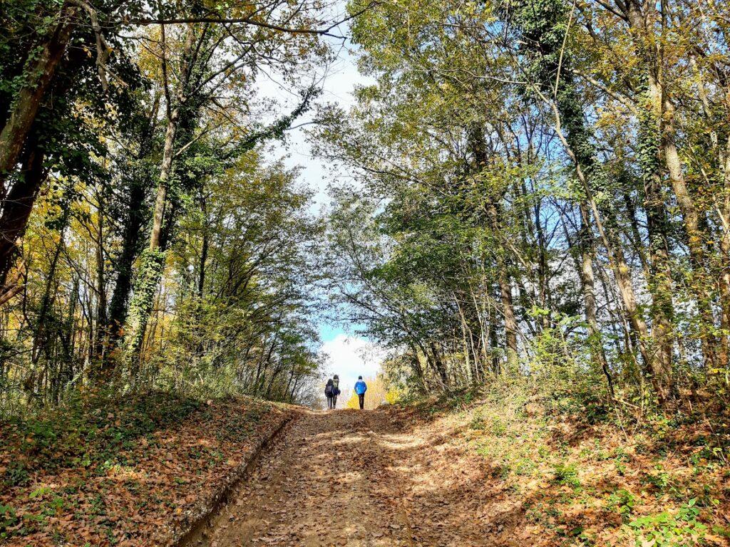 Vukomeričke gorice - staza šumarica